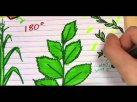 Screenshot of Doodling in Math: Spirals, Fibonacci, and Being a Plant [Part 3 of 3]