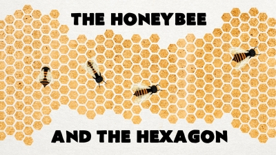 Screenshot of Why do honeybees love hexagons? - Zack Patterson and Andy Peterson
